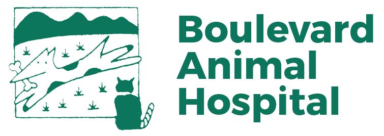 Boulevard Animal Hospital | Colleyville, TX